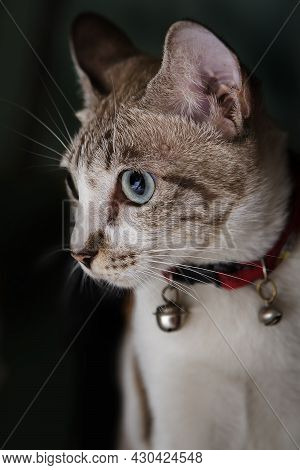 Beautiful Cat Staring On A Black Background.
