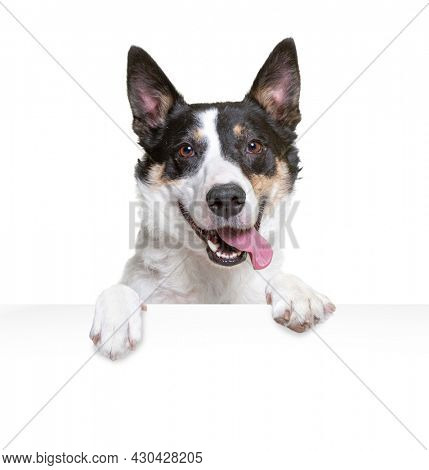 studio shot of a cute dog on an isolated background holding a sign