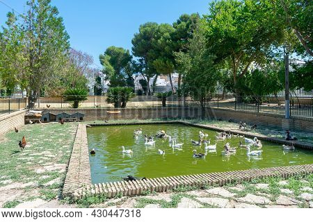 Ducks In The Garden Of Nations Park In Torrevieja. Alicante, On The Costa Blanca. Spain Europe.