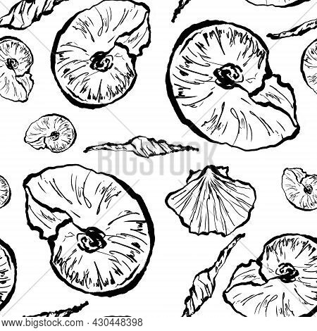 One Line Drawing Of Seashells, Black And White Sketch