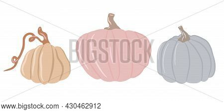 Collection Of Cute Colored Pumpkins, Delicate Shades Of Pumpkin, Isolated White Background, Set Of A