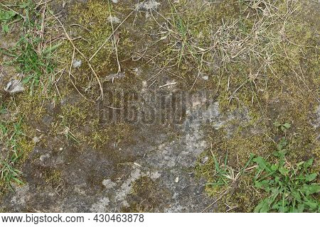 The Surface Of A Ground Soil Black Earth Road In The Forest Is Rolled, Smoothed By Cars, Cracked Fro