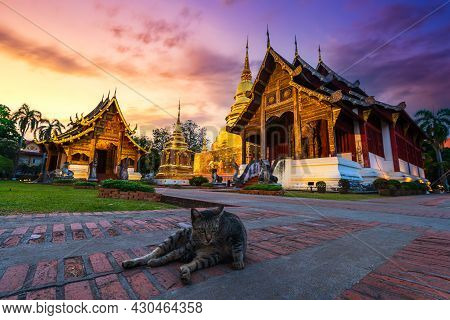 The Brown Cat's In Wat Phra Singh Is A Buddhist Temple Is A Major Tourist Attraction In Chiang Mai N