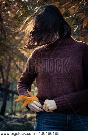 Brunette Girl In A Brown Sweater Puts Yellow Leaves In A Jeans Pocket, Vertical Frame. Yellow Leaves