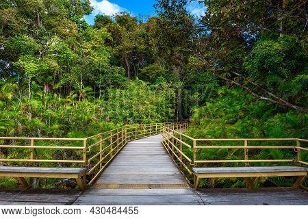 Wooden Boardwalk In The Rainforest Of Manuel Antonio National Park, Costa Rica