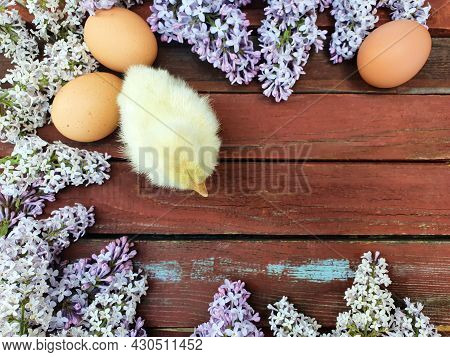 Yellow Chicken Chick, Brown Eggs Of Domestic Chicken Hens And Lilac Flower On Old Red Wood Texture B