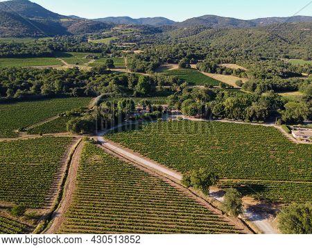 Wine Making In  Department Var In  Provence-alpes-cote D'azur Region Of Southeastern France, Vineyar