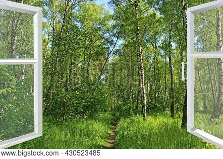 Panoramic Window Overlooking Path In Forest. Spring Has Come. Opened Window Into The Spring Forest.
