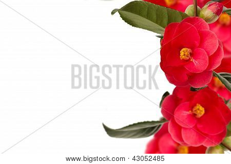 Camelia Collage Background