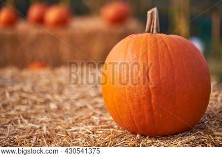 Autumn still-life with pumpkins. background concept