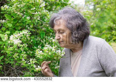 Elderly Woman Inhales The Scent Of Spring Flowers. An Elderly Woman Enjoys The Smell Of Flowers On A