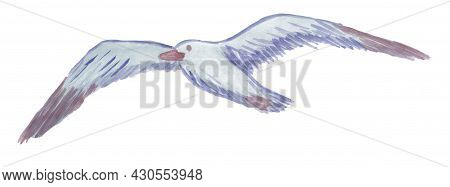 Watercolor Drawing Of Blue Flying Gull Isolated On White Background. Hand-drawn Clipart Of A Bird Wi