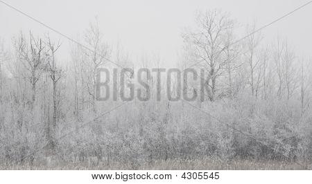 Forested Shoreline In Winter Fog