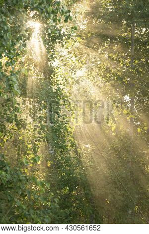 Morning Fog The Bright Sun Plays With Rays Through The Juicy Green Foliage. Green Abstract Summer Ba