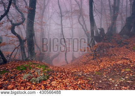 Road Through A Mystical Foggy Beech Forest In The Fall.