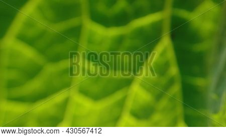 Green Blur Abstract Background. Leaf Bokeh, Green Texture Foliage. Macro Close Up. Backdrop, Banner