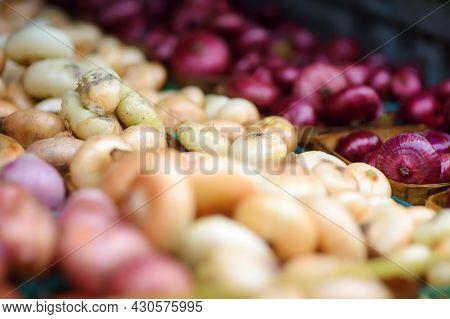Fresh Bio Onion On Showcase Of Supermarket Or Street Farmer Market. Typical Local Agricultural Fair