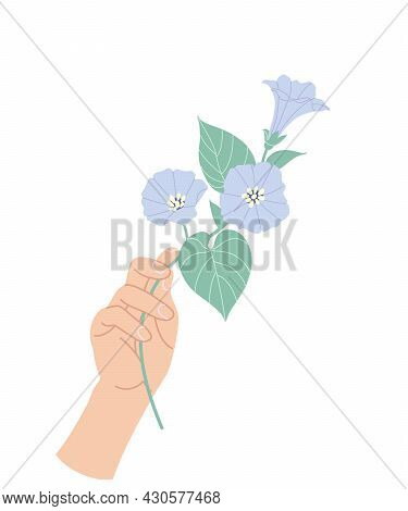 Female Hand Holding Tender Branch Of Bindweed. Simple Woman Hand With Delicate Blue Convolvulus Isol