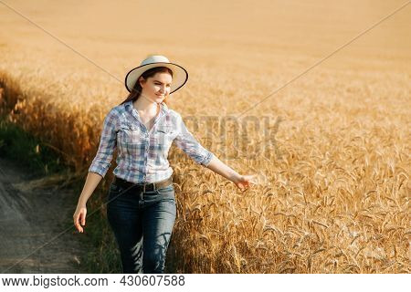 A Nice Woman Farmer Inspects Crop The Field Of Cereals. Farmer Woman Works In Wheat Yellow Field In