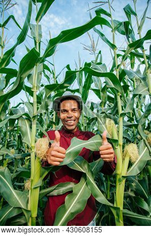 Man African American Farmer Looking At Camera And Showing Thumbs Up In Corn Field. Male With Hat On
