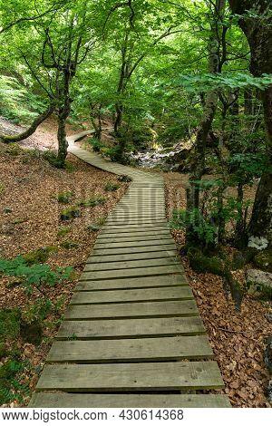 Faedo De Ciñera Beech Forest In Sring With The Wooden Walkway, Leon, Spain.