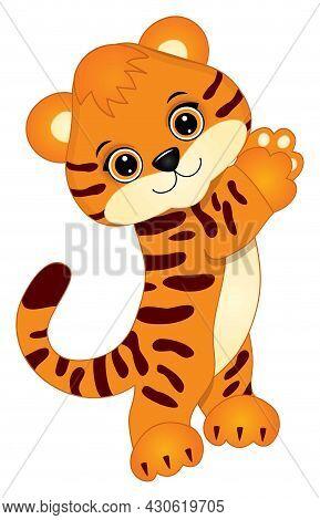 Cute Baby Tiger Standing. Vector Tiger. Baby Tiger Vector Illustration