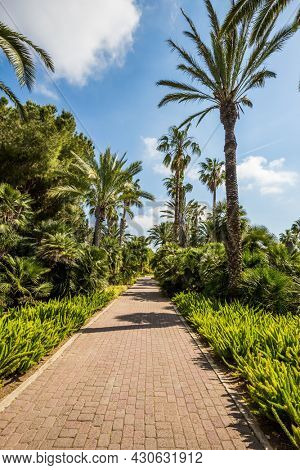 Stone paved scenic walkway. Warm sunny day. Great walk in a clean well-kept park. The magnificent botanical park on the slopes of Mount Carmel. Israel