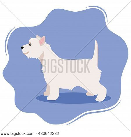 West Highland White Terrier Or Westie. Lovely Funny Dog Isolated On Violet Background. Fluffy Adorab