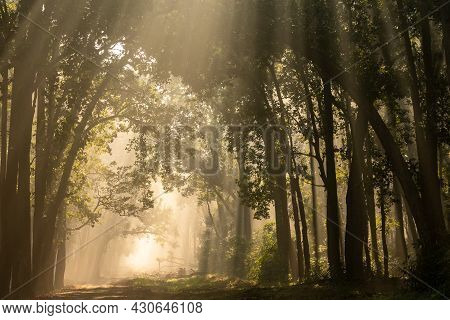 Scenic Forest In Winter Morning Fog Or Mist And Sunlight Or Sunrays Scattering With Canopy Of Tall S