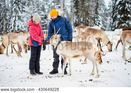 Family of father and daughter outdoors feeding reindeers on farm on sunny winter day in Lapland Finland