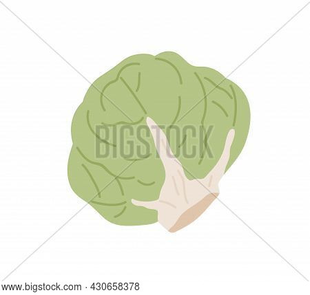 Green Fresh Lettuce Head. Icon Of Whole Leafy Vegetable. Healthy Veggie With Leaves. Flat Vector Ill