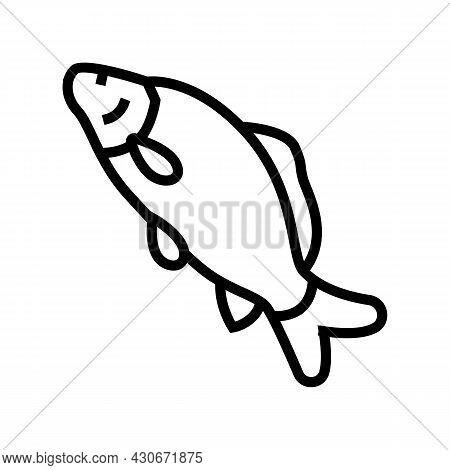 Common Carp Line Icon Vector. Common Carp Sign. Isolated Contour Symbol Black Illustration