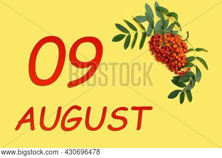 9th Day Of August. Rowan Branch With Red And Orange Berries And Green Leaves And Date Of 9 August On