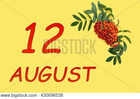 12th Day Of August. Rowan Branch With Red And Orange Berries And Green Leaves And Date Of 12 August