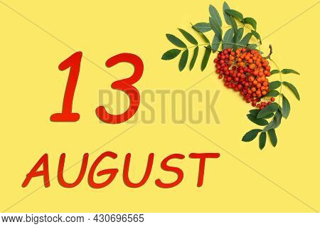 13th Day Of August. Rowan Branch With Red And Orange Berries And Green Leaves And Date Of 13 August