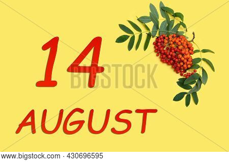 14th Day Of August. Rowan Branch With Red And Orange Berries And Green Leaves And Date Of 14 August