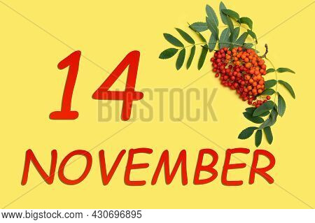 14th Day Of November. Rowan Branch With Red And Orange Berries And Green Leaves And Date Of 14 Novem