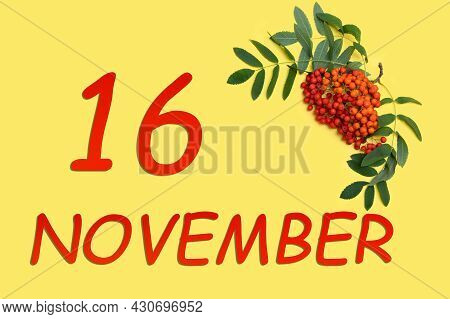 16th Day Of November. Rowan Branch With Red And Orange Berries And Green Leaves And Date Of 16 Novem