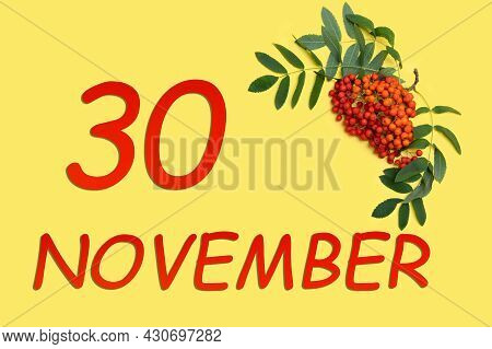 30th Day Of November. Rowan Branch With Red And Orange Berries And Green Leaves And Date Of 30 Novem