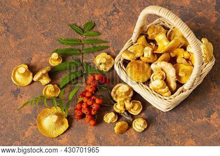 Fresh Chanterelle Mushrooms In Wicker Basket. Organic Chanterelles And Rowan Branch On Reddish-brown