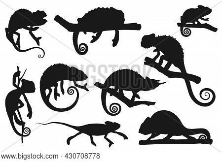 Chameleon Lizard, Animal Reptile Silhouettes Icons, Vector. Cartoon Chameleon Or Cameleon In Camoufl