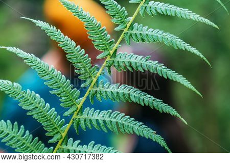 Green Fern Leaf Plant In Front Of Silhouette Of Kissing Couple In Forest. Unrecognizable Man And Wom