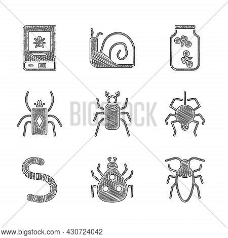Set Beetle Bug, Ladybug, Cockroach, Spider, Worm, Fireflies Bugs In Jar And Book About Insect Icon.