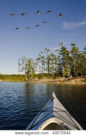 Geese Flys Over Kayak On A Northern Lake