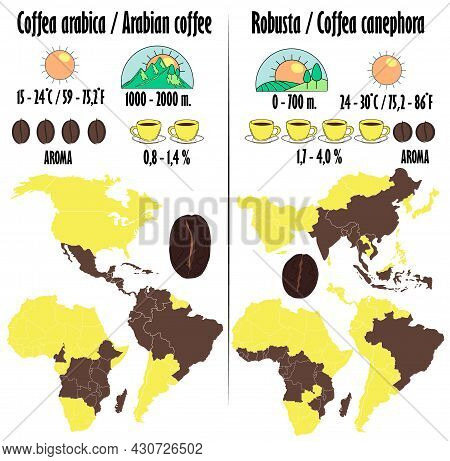 Arabica And Robusta. Types Of Coffee With A Description In The Form Of Icons Of Growing, Amount Of C