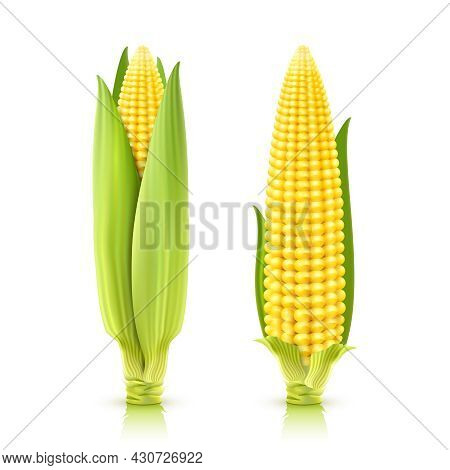 Sweet Corn Cobs Realistic Decorative Icons Set Isolated Vector Illustration