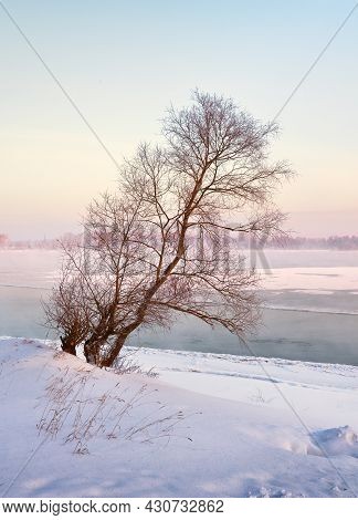 Naked Leaning Tree On The Bank Of The Ob River Covered With Snow, Ice, Haze On The Water, Blue Sky,