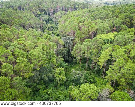 Aerial View Forest Tree Environment Forest Nature Background, Texture Of Green Tree Top View Forest