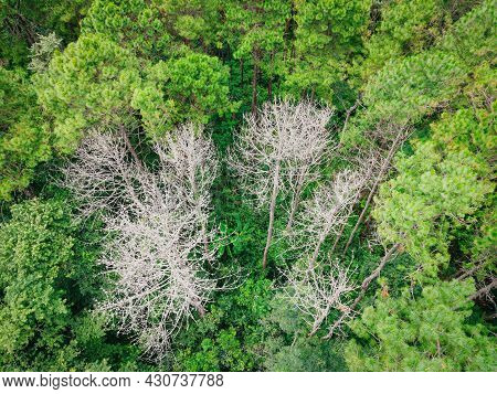 Aerial View Forest Tree Environment Forest Nature Background, Texture Of Green Tree And Dead Tree To