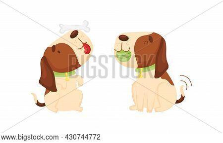 Cute Funny Beagle Dog Set. Cute Pet Animal Playing Witn Bone And Ball Cartoon Vector Illustration